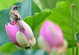福州:看花观鸟两相宜