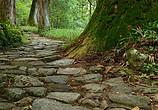 长满苔藓的石头和森林小路