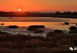 石羊河国家湿地公园迎来候鸟季