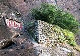 """中国最""""贵""""的两棵树,一棵配有专门的警卫,一棵投保1个亿!"""