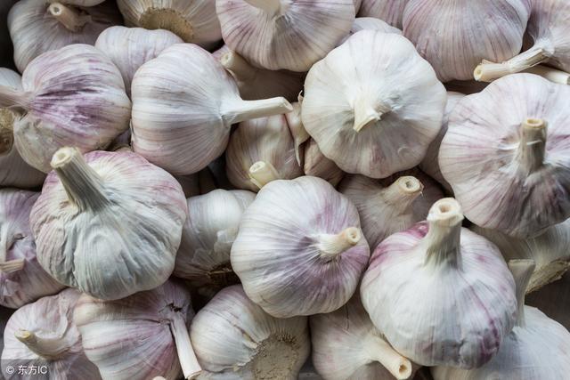大蒜便宜,种成蒜黄卖高价!这样种,蒜黄长得粗又壮!