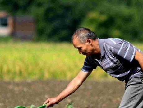 2020后农村土地谁来种,终于有答案了,未来将由这三类人来种植