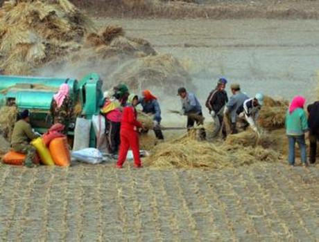 中国粮食连年丰产背后:粮价低,成本高,种植收益一年不如一年