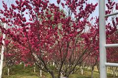 济南的春天还是很美的!